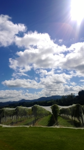 Endless skies above Ransom Vineyard