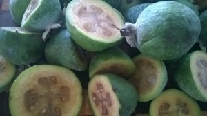 incredible Feijoas