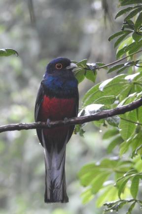 1 yacutinga parrotDSCN0911